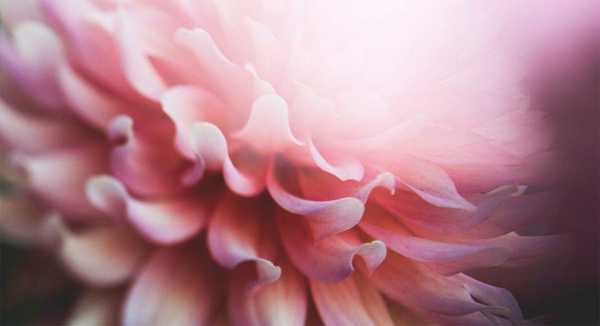 modern mystery school soul flower
